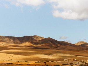Billeje & biludlejning Fuerteventura Lufthavn